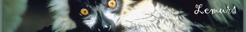 Lemurs: return to home page
